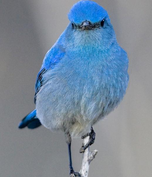 bluebird0001