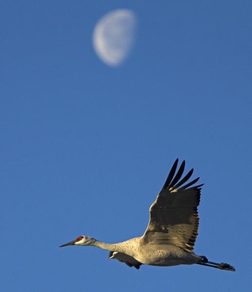 crane0001