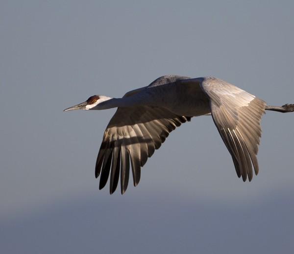 crane0008