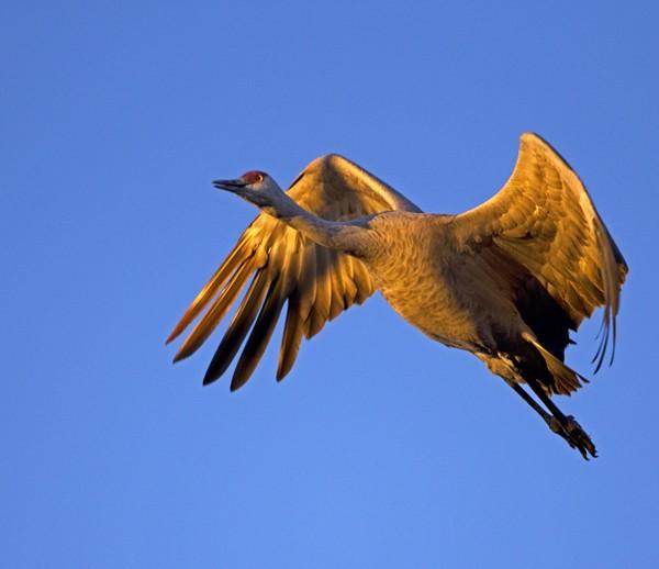 crane0014