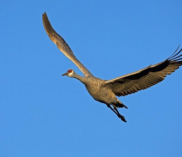 crane0019