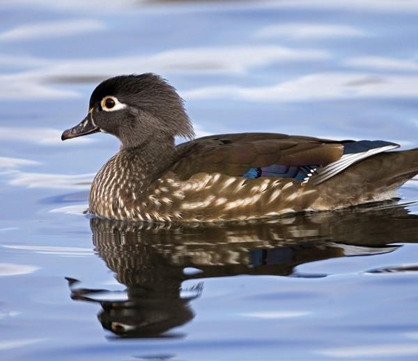 duck0024