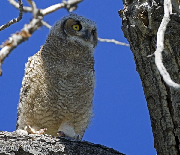 owl0007