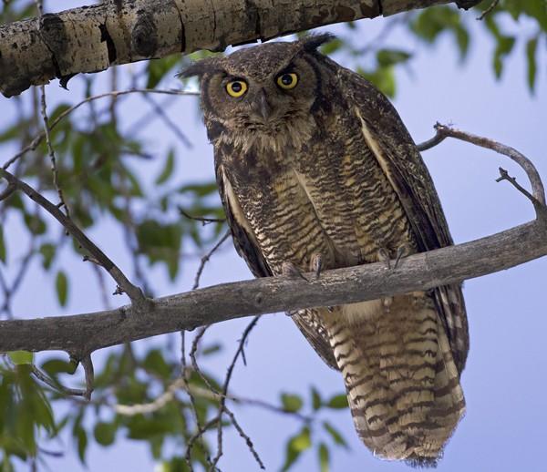 owl0009