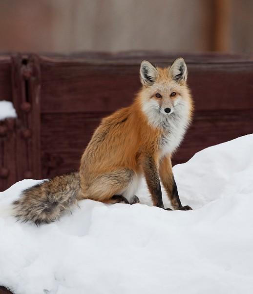 fox0001