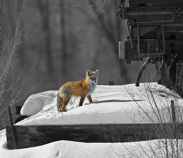 fox0020
