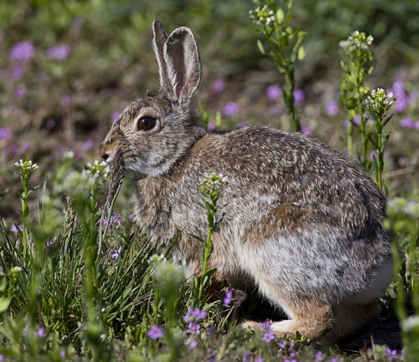 rabbit0001