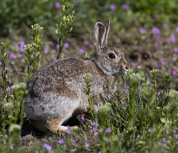 rabbit0009