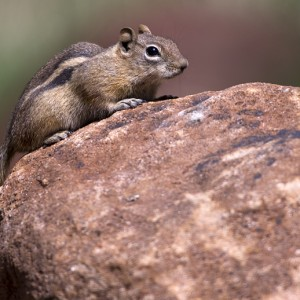 squirrel0018