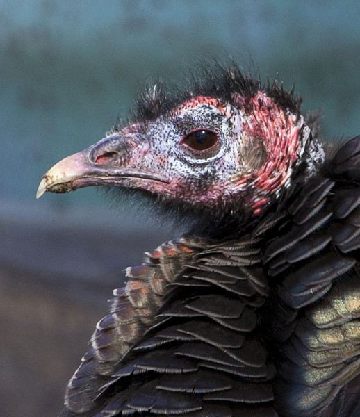 turkey0013