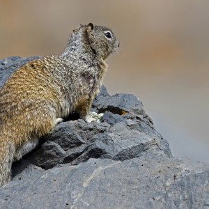 squirrel0023