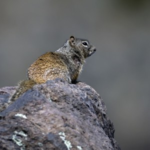 squirrel0024